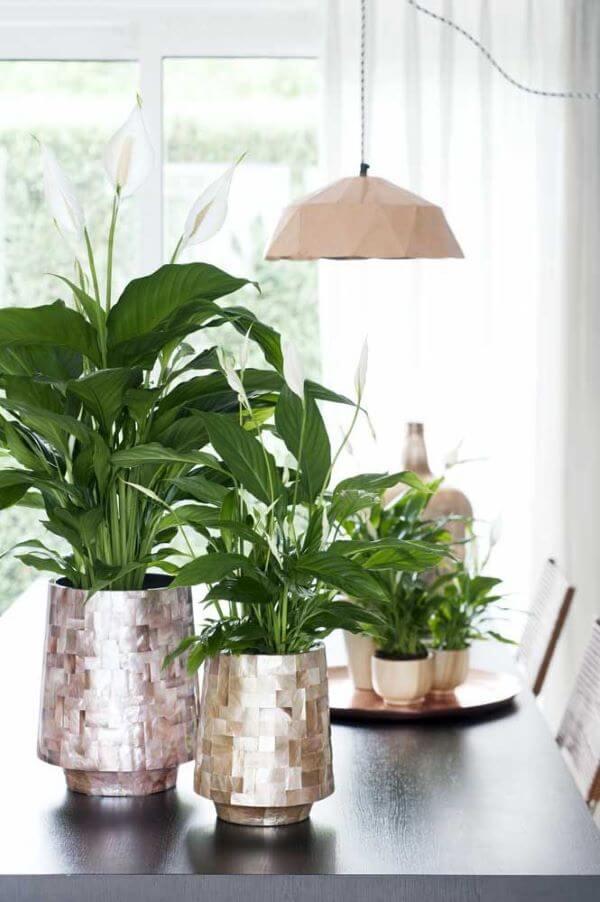 Vasos decorativos com lírio da paz
