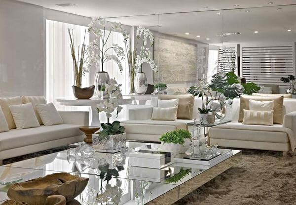A beleza das plantas para sala realçam o ambiente