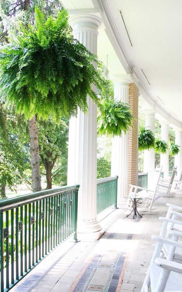 A samambaia americana traz um toque de verde para a varanda