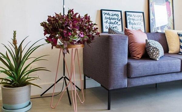 As cores das plantas para a sala decoram o ambiente