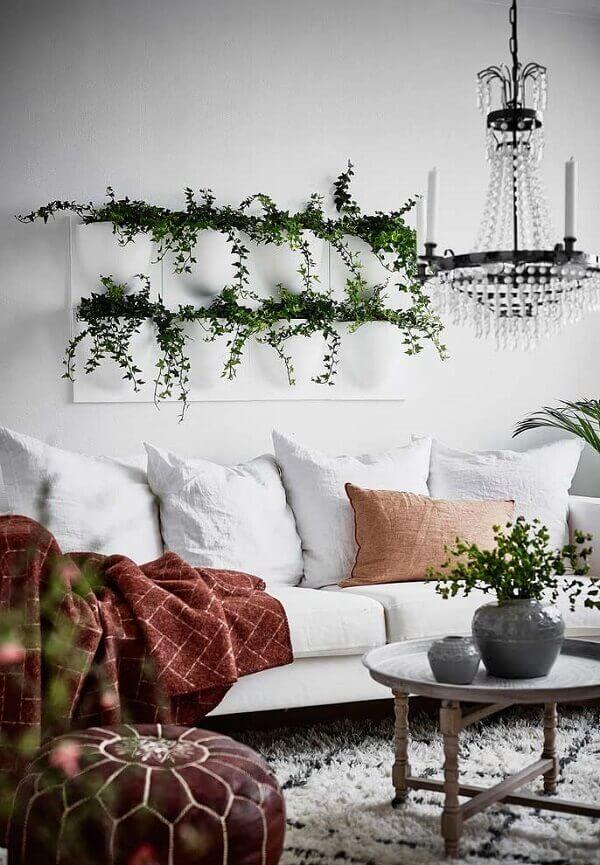 As heras são plantas para sala decorativas