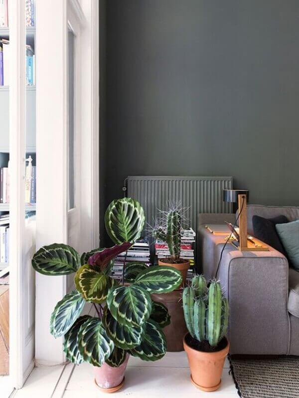 As plantas para sala como a Maranta foram plantados em vasos pequenos