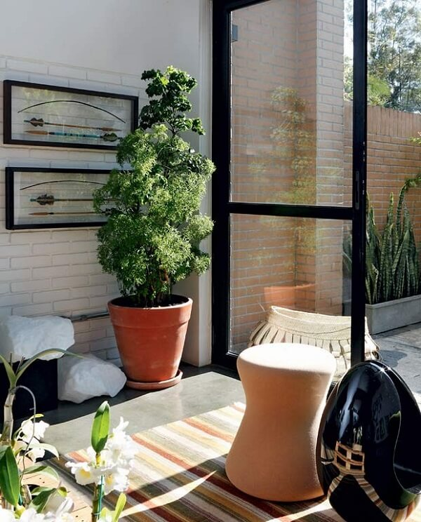 As plantas para sala como a árvore da felicidade devem ficar próximas de janelas
