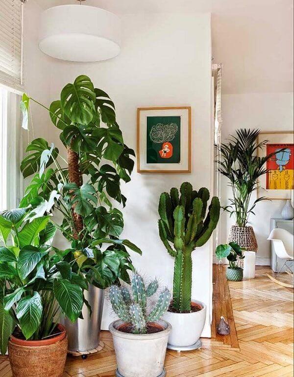 As plantas para sala como a Costela de Adão precisam de locais amplos