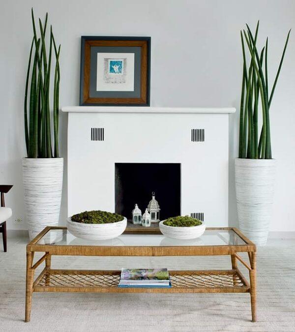 As plantas para sala como as Lanças de São Jorge precisam de vasos grandes e altos