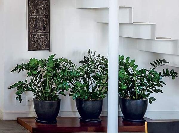 As plantas para sala como as Zamioculcas se adaptam bem a meia sombra