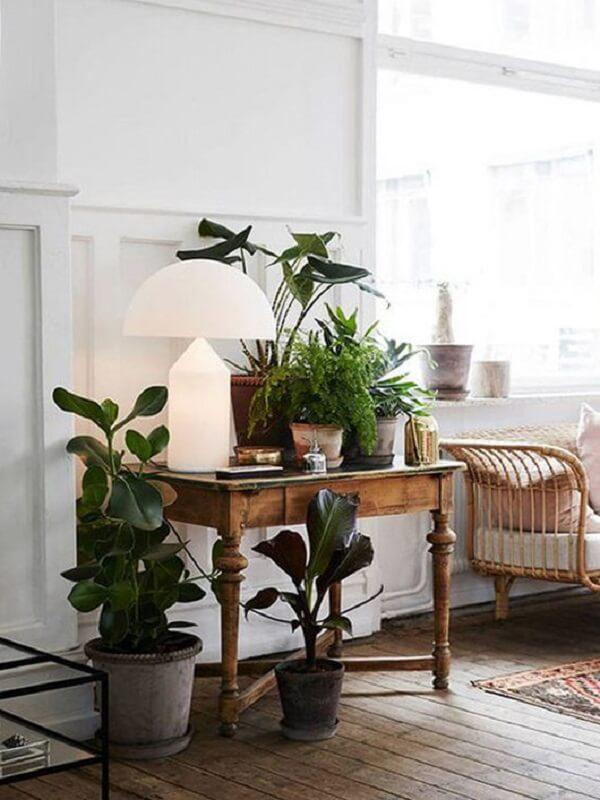 As plantas para sala em estilo rustico foram colocadas em mesa