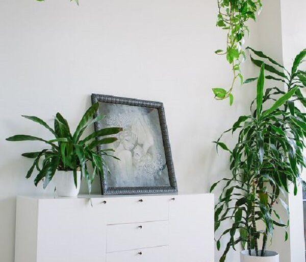 As plantas para sala pendentes devem ser colocadas em estruturas altas