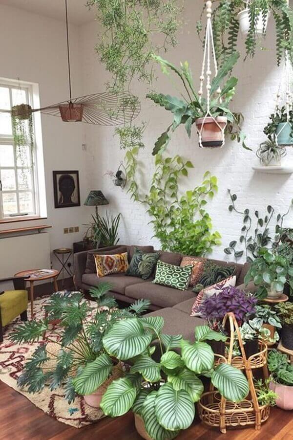 As plantas para sala precisam de iluminação natural