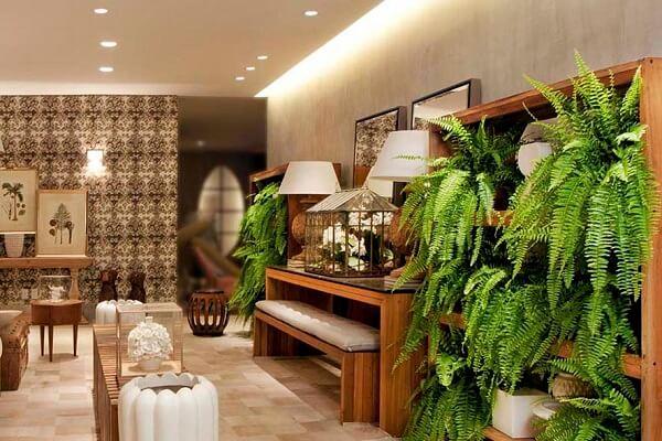 As samambaias são plantas para sala decorativas