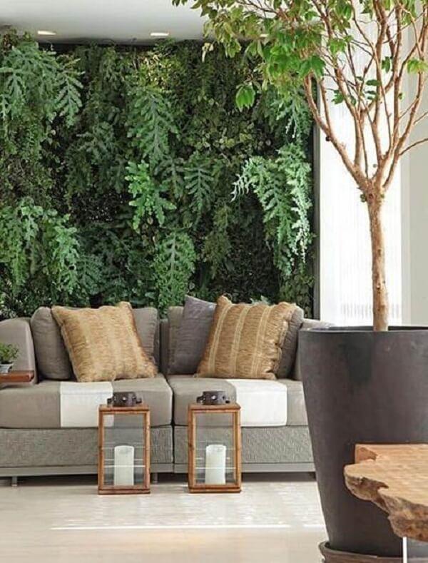 As samambaias são plantas para sala resistentes