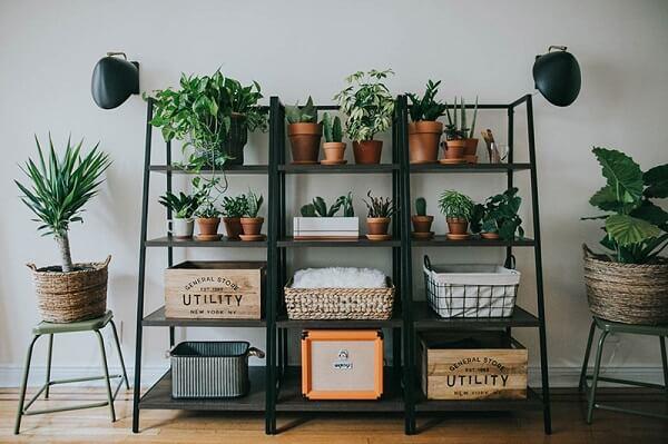 Estantes com plantas para sala