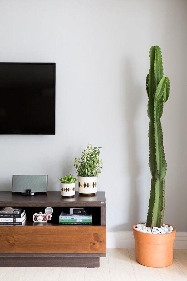 Os cactos são plantas para sala fáceis de cuidar