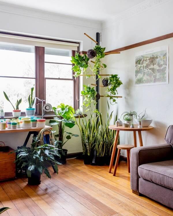 Os suportes altos acomodam as plantas para sala