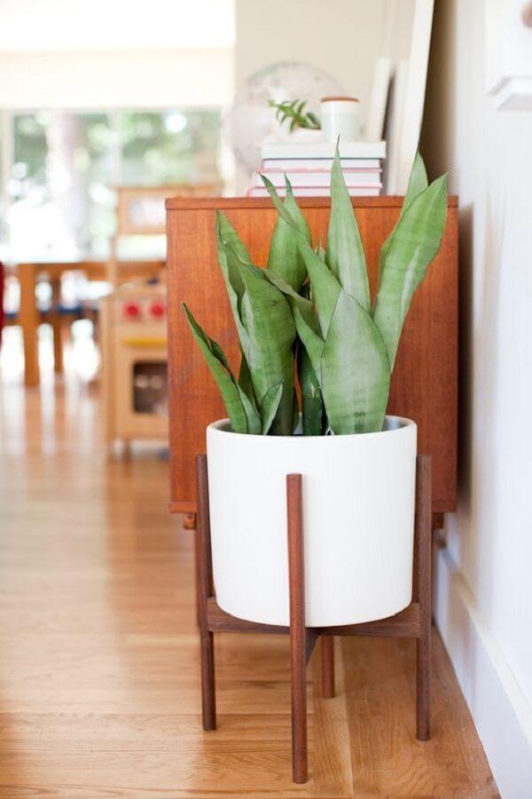 Plantas para sala em vasos sobre suportes