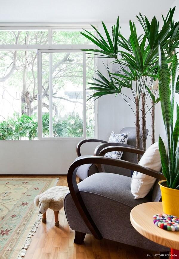Plantas para sala entre poltronas