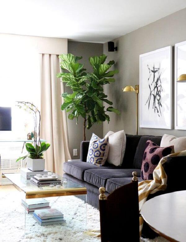 Plantas para sala na decoração