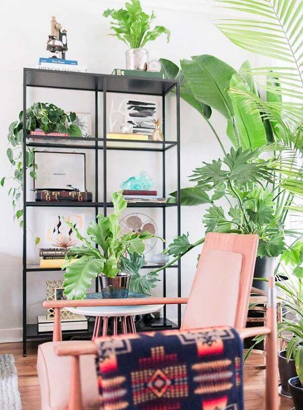 Plantas para sala refrescam o ambiente