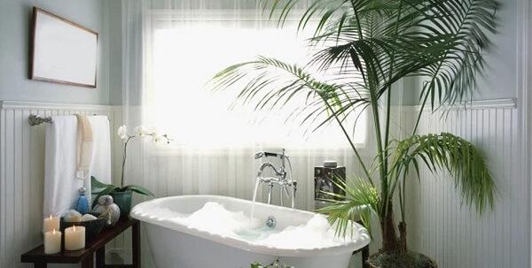 As plantas para banheiro purificam o ar