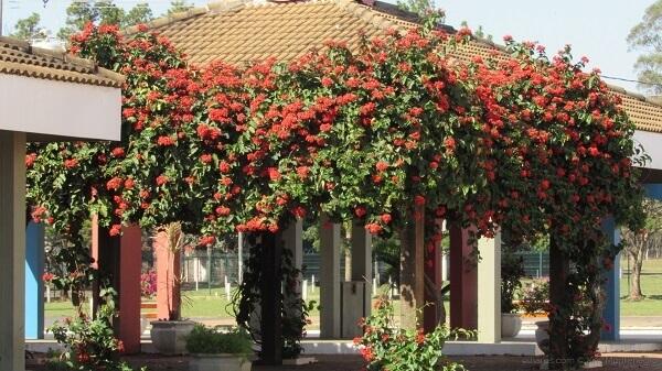Caramanchão com flores vermelhas