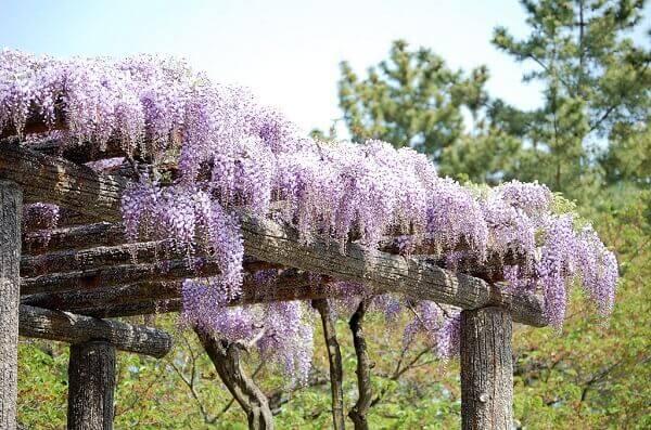 Caramanchão com flores