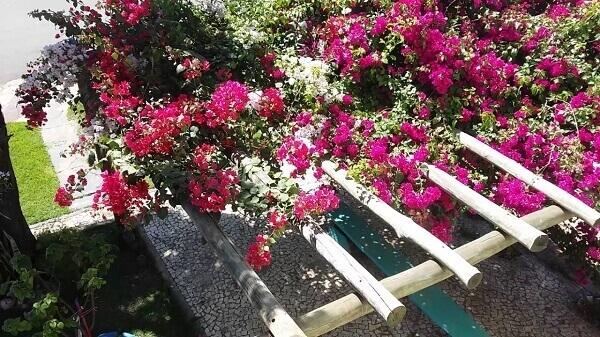 Caramanchão de primavera