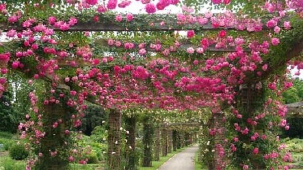 Caramanchão florido para área externa
