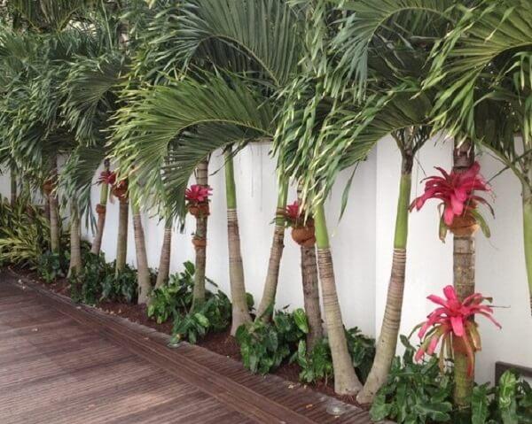 Em cada palmeira foi pendurada uma Bromélia