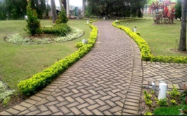 Pingo de ouro é muito utilizado para fazer caminhos
