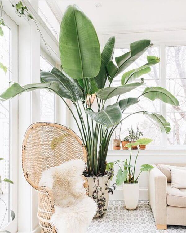 Plantas grandes para e dentro de casa chique