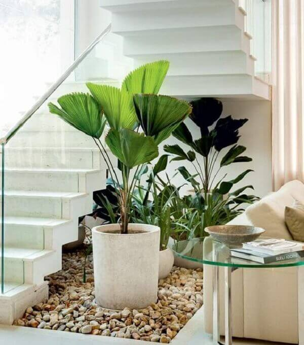 Plantas grandes para ter dentro de casa sofisticada
