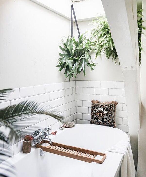 Plantas para banheiro chifre de veado