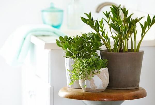 Plantas para banheiro decoram com estilo o ambiente