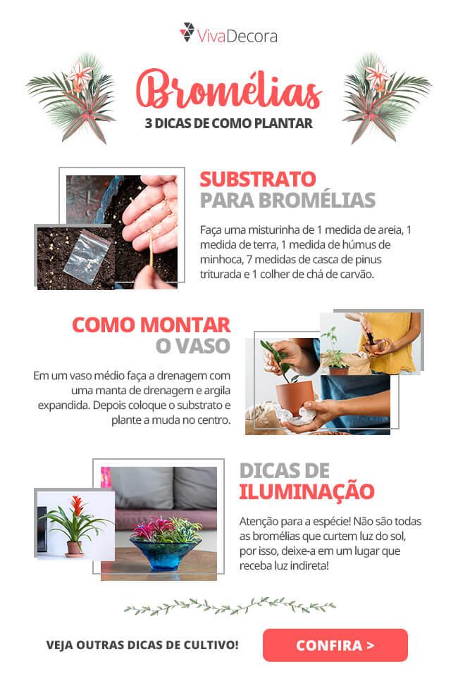 Infográfico - Bromélias