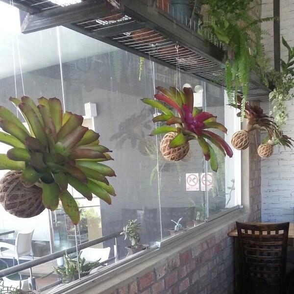 kokedama com Bromélia penduradas na janela