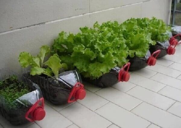 Como plantar alface em garrafa pet em casa