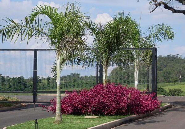 Tipos de palmeiras areca em estacionamento