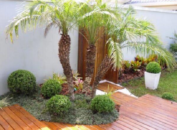 Tipos de palmeiras de pequeno porte em canteiro