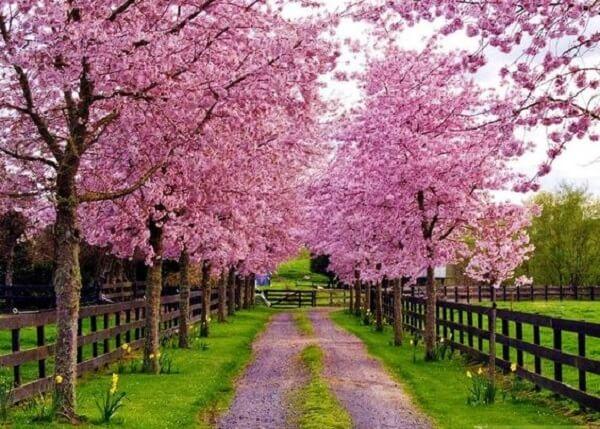 Árvores floridas encantam a entrada de chácara