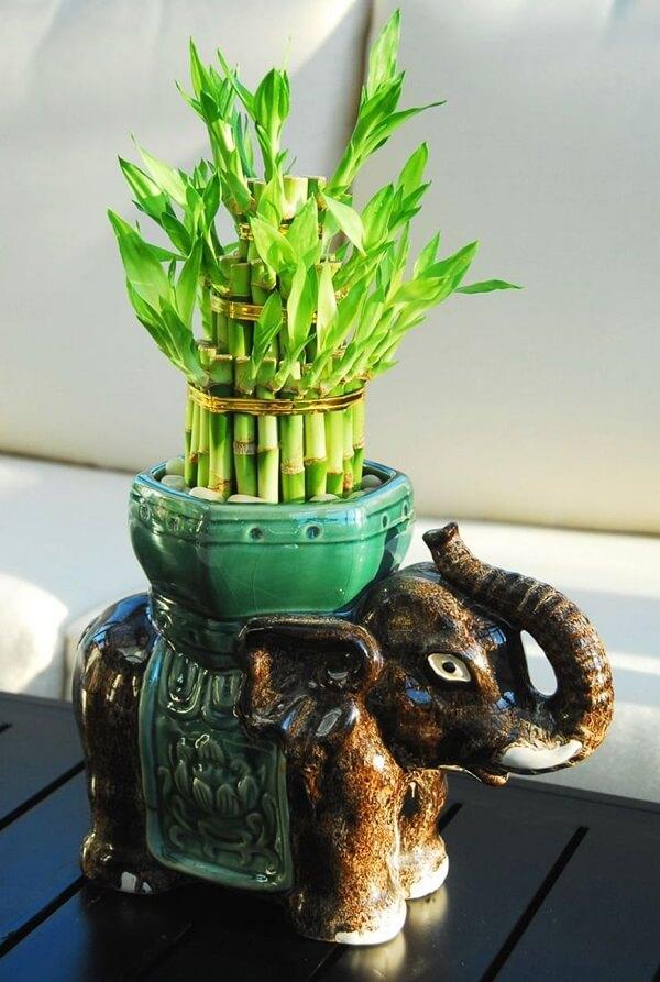 Arranjo feito com bambu da sorte