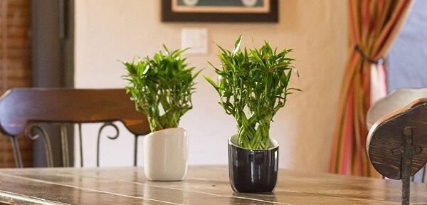 Bambu da Sorte complementa a decoração da sala de jantar