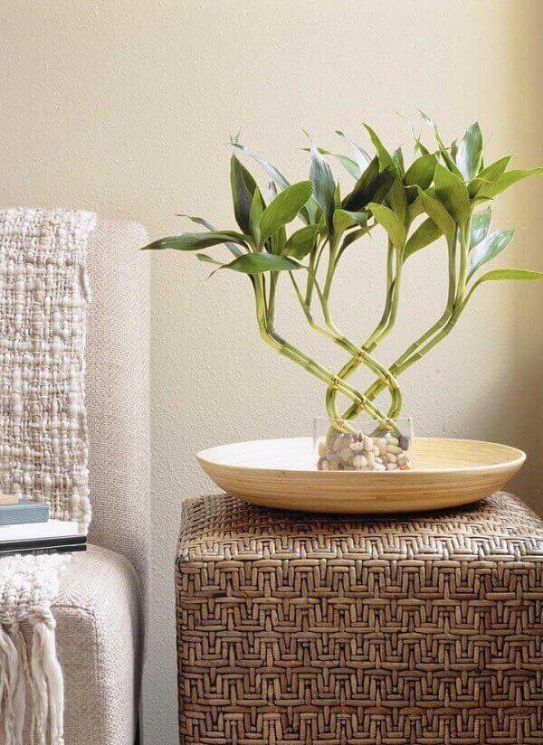 Bambu da sorte complementa a decoração do ambiente