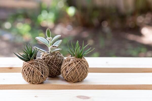 Kokedama feita com suculentas