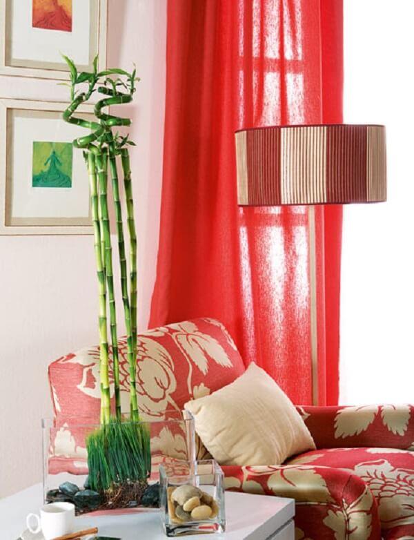 Inclua o bambu da sorte na decoração da sala de estar
