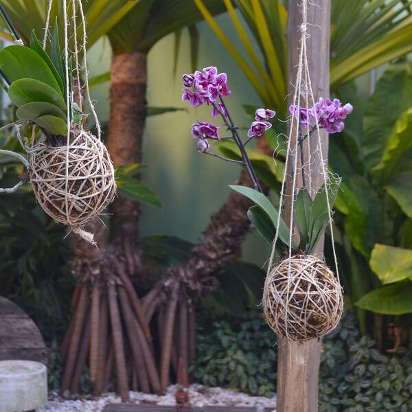 Kokedama de orquídeas expostas em área externa