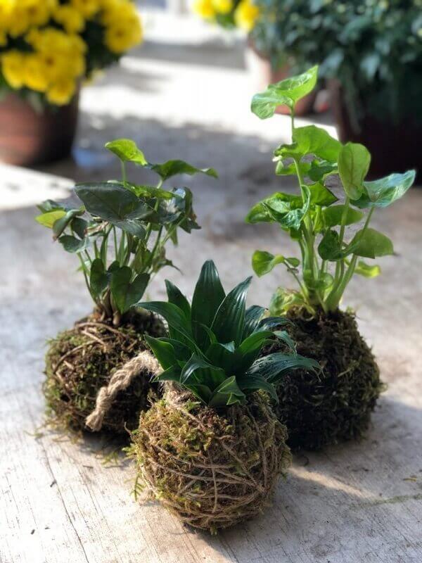 Kokedama serve de suporte para três plantas