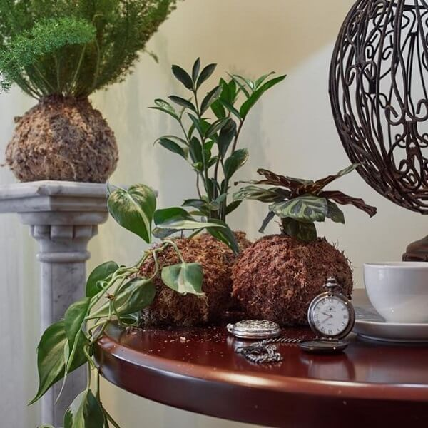 Kokedama sobre a mesa complementa a decoração do ambiente