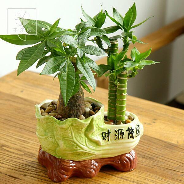 Mini arranjo formado com bambu da sorte