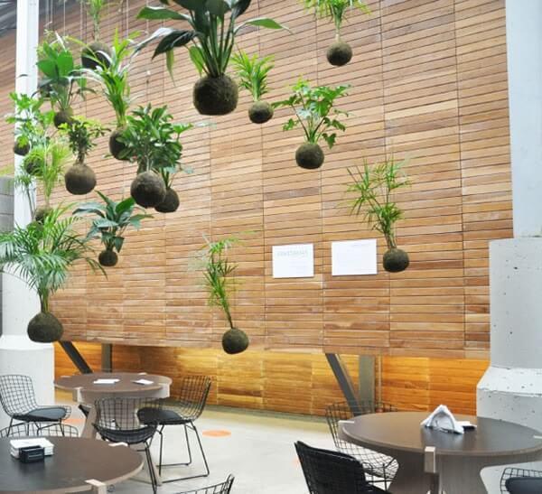 Restaurante decorado com inúmeras kokedama suspensa