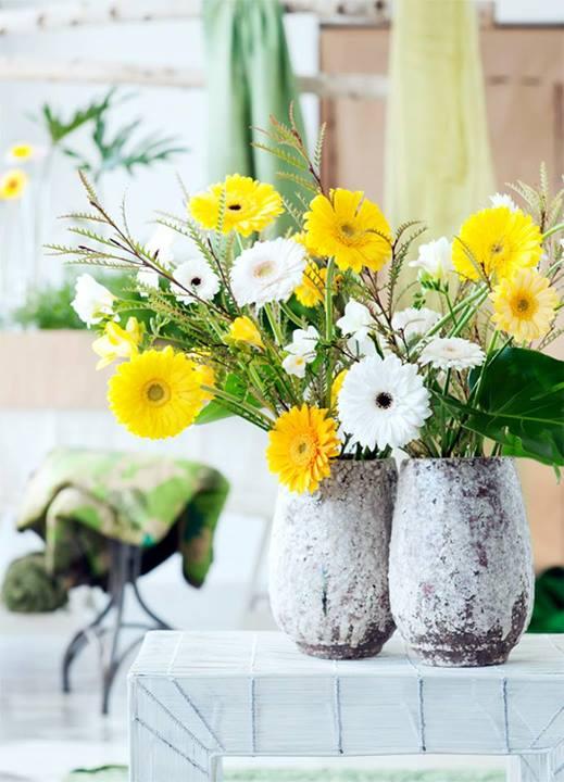 Flores da primavera Gérbera